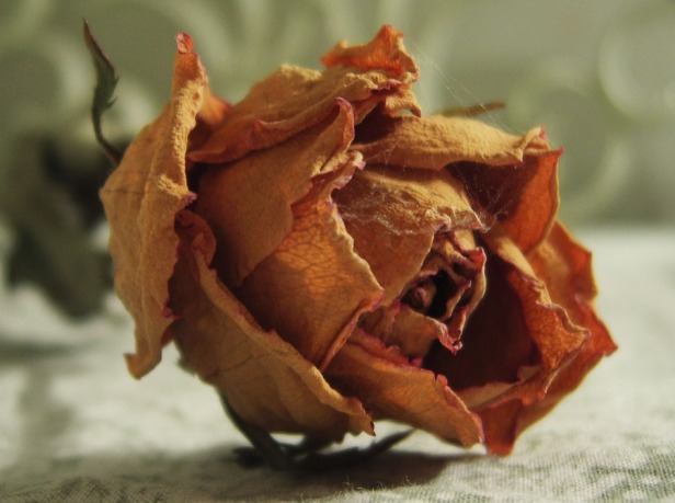 dead_rose